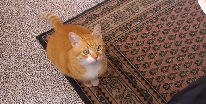 お膝に乗りたいニャ♡飼い主さんのお膝が大好きな猫