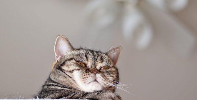 飼い主を『見下している』猫の行動8つ