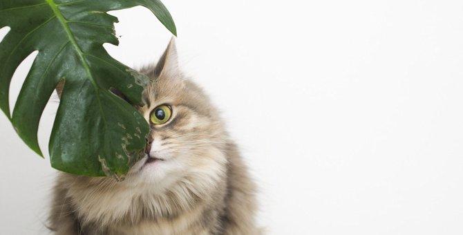 猫の心にストレスを与える『飼い主の無意識行動』4選