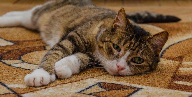 猫が痛みを感じている時の仕草や行動5つ
