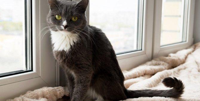 かぎ、尾曲がり…猫のしっぽ、まっすぐじゃなくても大丈夫?