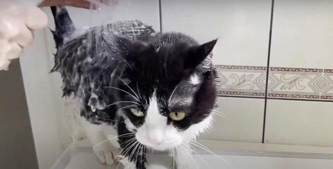 大絶叫!全力で遠慮したい猫ちゃんのお風呂タイム