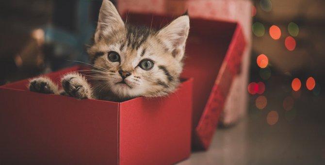 スヌーピーに登場する猫「ファーロン」とは?おすすめのグッズまで