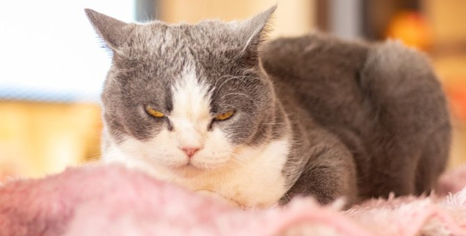 『叱られた猫』がする行動5選