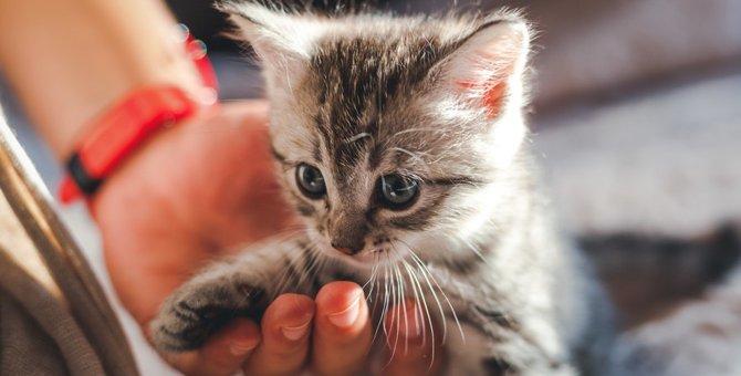 猫をお迎えしたら?必ずやってほしい7つの事