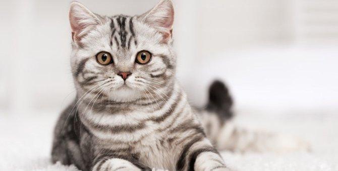 猫ウィルス感染症の種類と症状