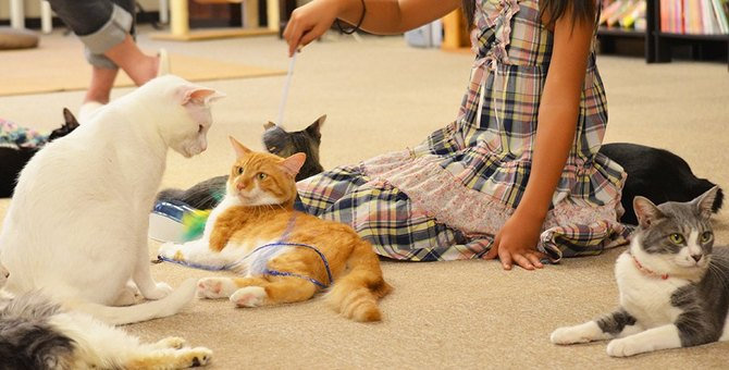 川越の猫カフェおすすめ2選!あの「情熱大陸」に出たお店も
