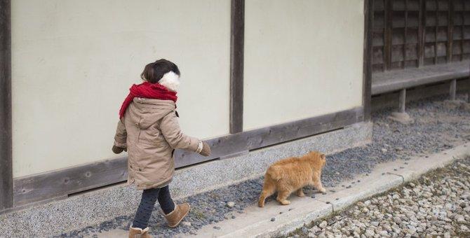 猫が飼い主の前を歩く5つの心理