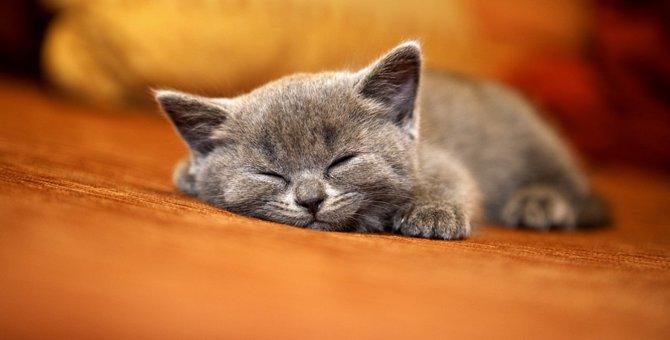 猫がこたつを好む理由と注意すべき危険性