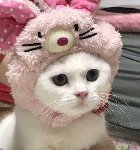猫が人間から愛される理由4つ