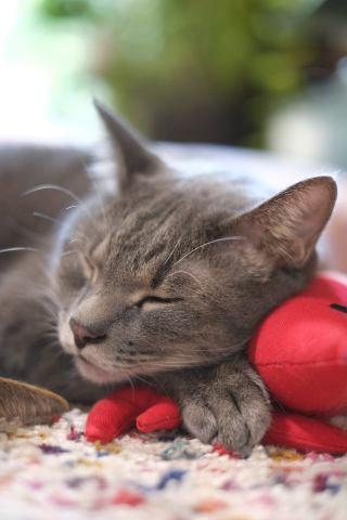 猫に「一緒に寝たい」と思われる方法4つ