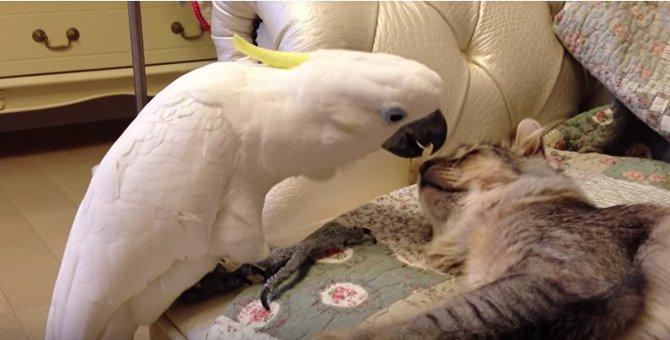 猫とオウムのやり取りが可愛すぎる!