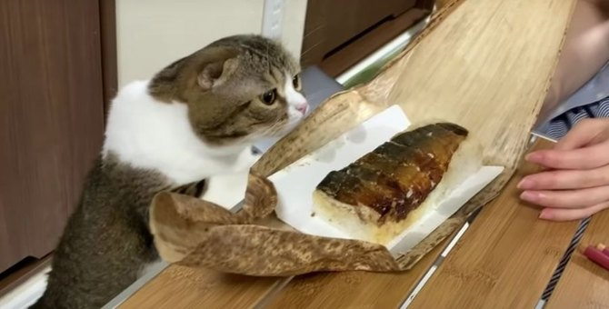 やっぱり気になる…飼い主さんのお寿司を狙う猫さん!