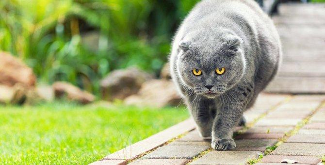 気をつけないと死に至るかも?太りすぎた猫に起こる健康被害5つ