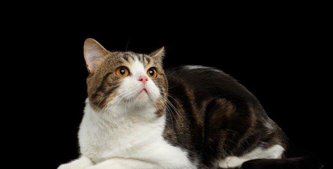 猫には霊が見えている?霊感があると言われる理由