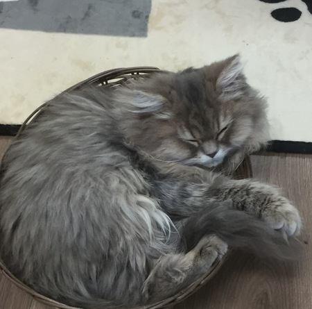 埼玉 東大宮にある猫カフェ「猫の部屋セイワ」に飛び入り!
