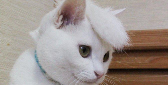 夜露四苦!嶋大輔風リーゼントで決めた猫さんがクール過ぎる
