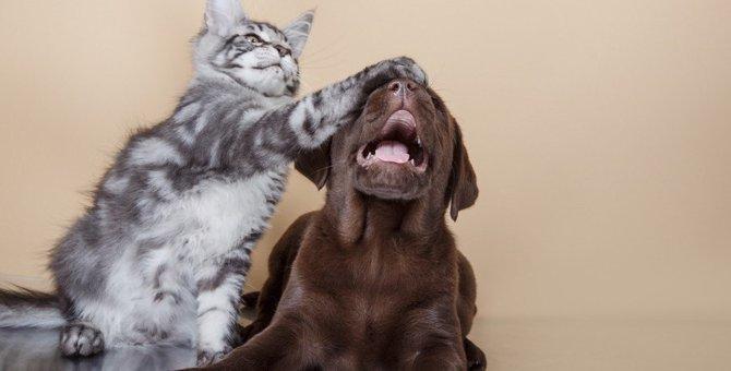犬と猫のおもしろ、仲良し動画9連発!