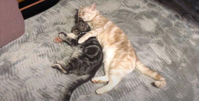 姉猫ちゃんに愛されてとろける弟猫ちゃん♡