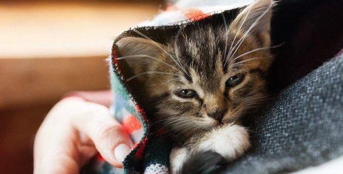 猫が毛づくろいをしなくなった時に考えられる危険な病気3選