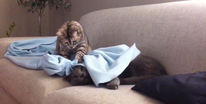 寝ていた猫ちゃん、起こされた挙句にパンチまでくらう