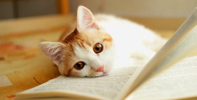 猫との信頼関係にヒビが入る飼い主のタブー行為5選!関係修復のためにすべきことは?
