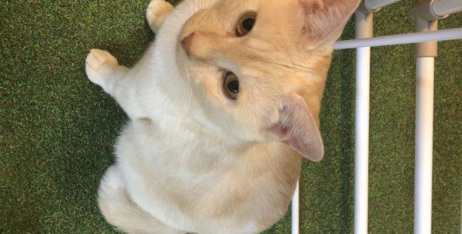 猫が人の言葉を理解しているときに見せる仕草5つ