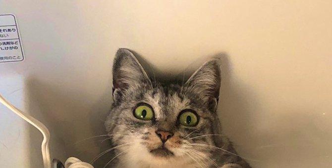 お水入れないでニャ!浴槽で寛ぐ猫が抗議する表情がイイと話題