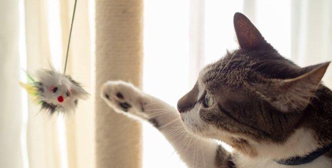 猫に絶対やってはいけない『遊び方』5選