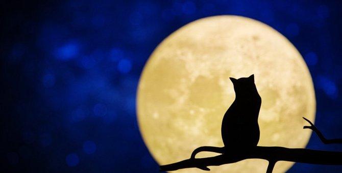『月』が似合う猫の種類6選