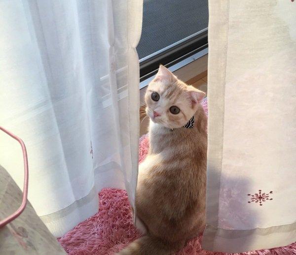 猫は気まぐれ?無表情?飼ってみると分かる7つの事