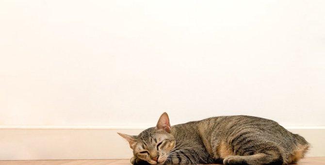 嫌いな猫も?毛布やタオルのふわふわを避ける7つの原因
