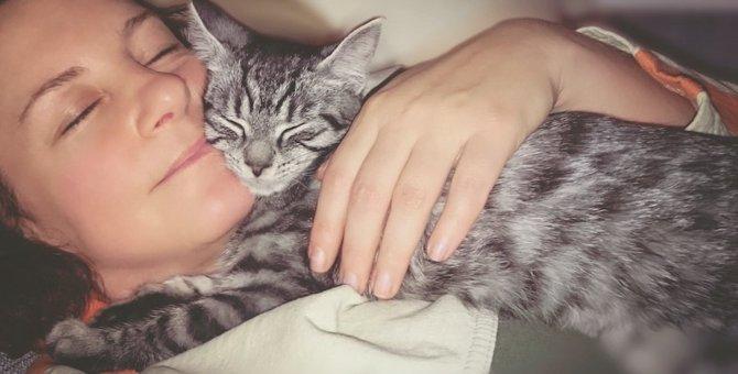 猫が飼い主の側にいたい時にする8つの仕草