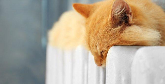 猫が人の間に割り込んでくるのはなぜ?5つの心理