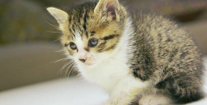 捨て猫を見つけた時に取る行動と保護した際の対処法