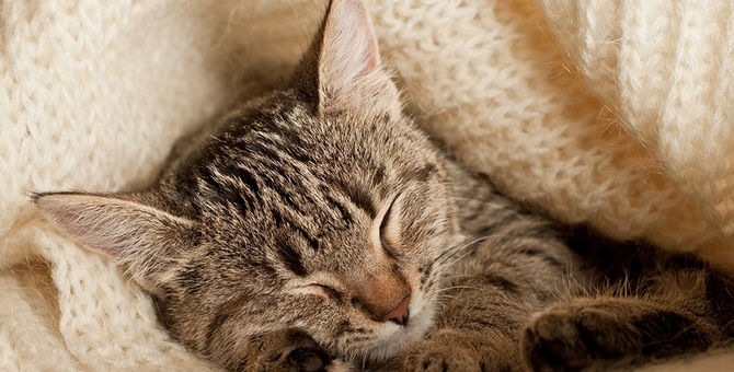 猫の老衰について~看取るにあたり飼い主がすべきこと~