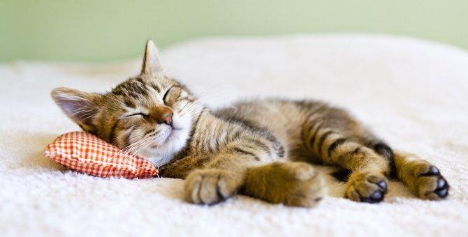 猫の寝相がいつもと違う…注意したい4つの事