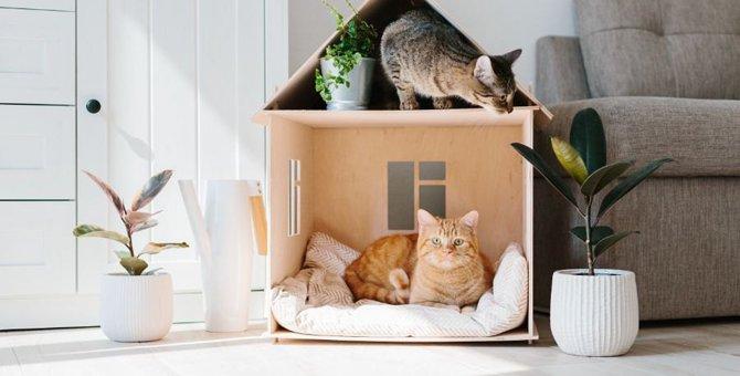 部屋を模様替えするときに猫のストレスを最小限に抑える方法6つ