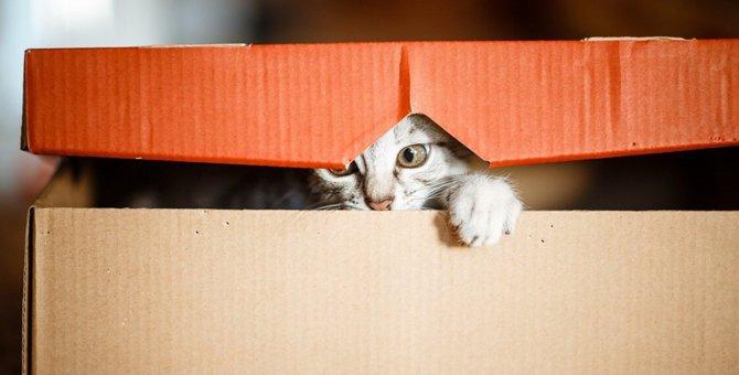 猫が突然怖がりになった…考えられる原因と対処法4つ
