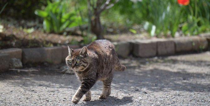 『嫉妬している猫』がする行動4選!愛猫の気持ちをなだめる方法とは?