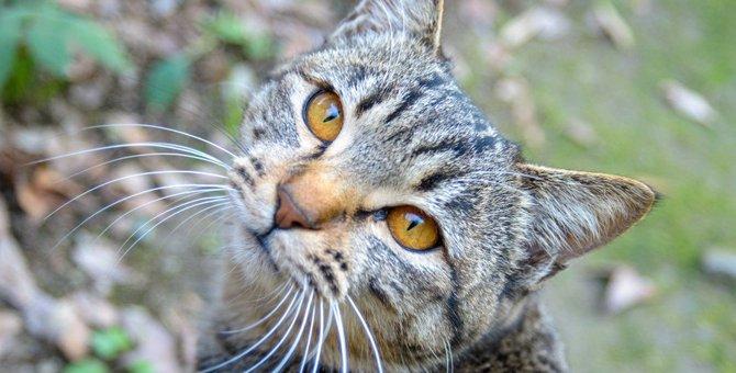 猫が飼い主の『前を歩きたがるとき』の気持ち4つ!ケース別の対応方法とは?