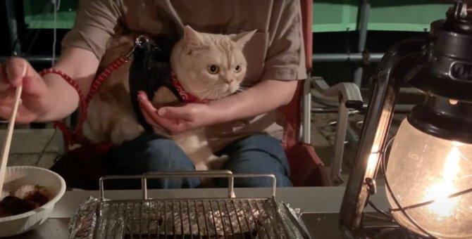 飼い主さんと一緒にお肉食べれるかな?猫ちゃん達とバーベキュー♪