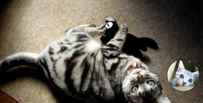 「愛情は独り占めしたいの!」ジェラシー炸裂の猫ちゃん!