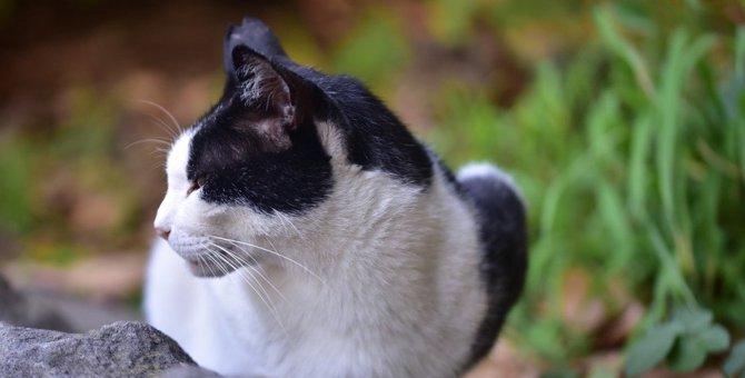 猫の『虐待事件』を減らすためにできること3つ
