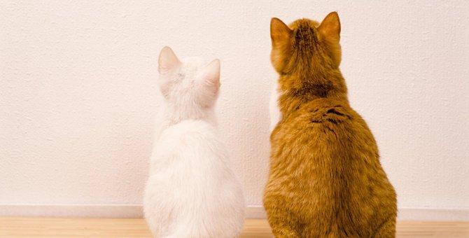 猫同士がする4つの仲良しサイン
