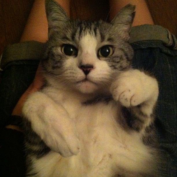 坂本美雨さんは超猫好き!愛猫の名前や品種、結婚式のエピソードなど