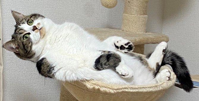 貫禄たっぷり!ふんぞり返る猫さんの大御所感が凄いと話題!