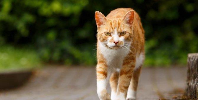 猫を撃退する2つの方法