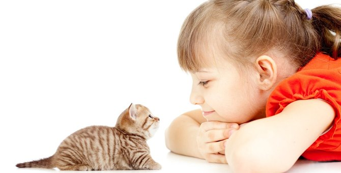 猫が『目線を合わせてくるとき』の気持ち3選