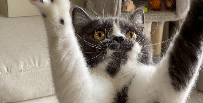 淡白な猫も夢中に!『とっておきの遊び方』5選